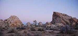 Joshua Tree - Ciklopo + Potato Head - Sunrise.jpg