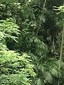 Jungle in europe 2.jpg