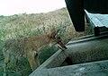 Juniper Dunes Critter Cam (21307025950).jpg