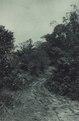 KITLV - 88322 - Kleingrothe, C.J. - Medan - Road on the grounds of the company Kwala Begoemit of the Deli Company in Deli - 1905.tif