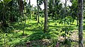 Kampung Sayong - panoramio (1).jpg