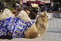 Kashgar everyday life IGP3746.jpg