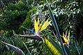 Kirstenbosch-008.jpg
