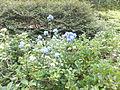 Kobe Municipal Arboretum in 2013-6-22 No,77.JPG