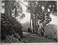 Kodai Coakers Walk 1900.jpg