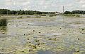 Kokemäenjoen suistoa Meri-Porissa 3 - White balance.jpg