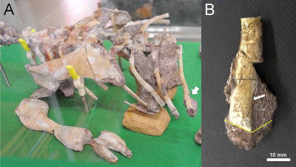 Koreanosaurus boseongensis holotype