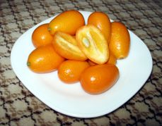 Kumquat-Crosssection.jpeg