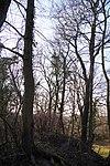 LSG H 00070 Calenberger Leinetal - nördlicher Wall bei der Calenburg (2).jpg