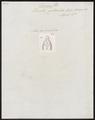Lacerta guttulata - kop - 1700-1880 - Print - Iconographia Zoologica - Special Collections University of Amsterdam - UBA01 IZ12400119.tif