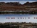 Laguna Nimez - panoramio.jpg