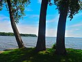 Lake Mendota seen though three Trees - panoramio.jpg