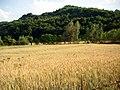 Lan de grâu - panoramio.jpg