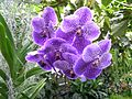 Lancut Storczykarnia 1.jpg