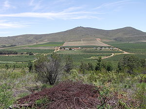 Langkloof - Orchards in the Langkloof between Joubertina and Avontuur