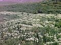 Lar Dam, Flower 4 - panoramio.jpg