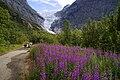 Las flores observan el glaciar.jpg