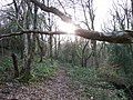 Late Sun Through The Trees, near Red brook - geograph.org.uk - 1205839.jpg