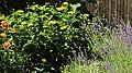 Lavendelbeet im Innenhof 01.jpg