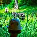 Leipziger Zoo (260712679).jpeg