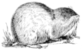 Lemming (PSF).png