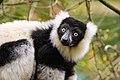 Lemur (26080829998).jpg