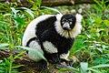 Lemur (26773278099).jpg