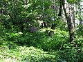 Les v kopci nad Úsobím.jpg