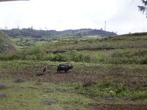 Leimebamba District - A farmworker near Leimebamba
