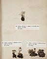 Lichenes Helvetici I II 1842 028.jpg