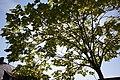 Licht und Schatten - panoramio (3).jpg