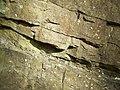 Limestone Exposure (detail) near Munslow, Shropshire - geograph.org.uk - 676659.jpg