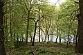 Linacre Woods and Lower Reservoir - geograph.org.uk - 1284669.jpg