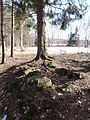 Linrötningsgrop i storhög RAÄ Skara 48, den 30 mars 2013c.JPG