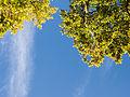 Local trees (8060046973).jpg