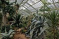 London - Kew Gardens - Princess of Wales Conservatory 1987- Ten Climatic Zones IV.jpg
