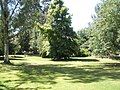 Looking at the lawn near the pagoda pond at RHS Wisley - geograph.org.uk - 878351.jpg
