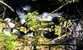Looking down at Millstream Creek old bridge foundation. VIEW IN PANORAMIO FOR DESCRIPTION - panoramio.jpg