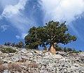 Lovely Tree - On the Way to Lake Aloha (3075567197).jpg