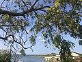 Lunugamwehera reservoir.jpg