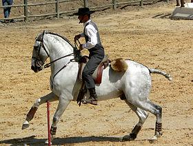 cheval espagnol trec