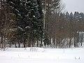 Lyovintsy, Kirovskaya oblast', Russia, 612079 - panoramio (73).jpg