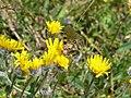 Mühlwald - Blumen mit Schmetterling.jpg