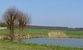 MOs810, WG 2014 17, OChK Jasne Pole (Orpiszew, pond).JPG