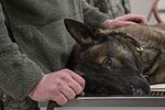 MWD takes bite out of dental care 141219-F-QE361-041.jpg