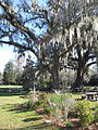 Magnolia Plantation and Gardens - Charleston, South Carolina (8555361561).jpg