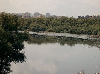 Mahim - Mahim Creek