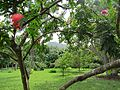Maire Nui Gardens (7374366114).jpg