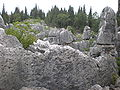 Major Stone Forest NE outer area 9.JPG