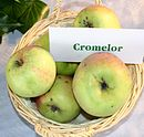 Malus-Cromelor.jpg
